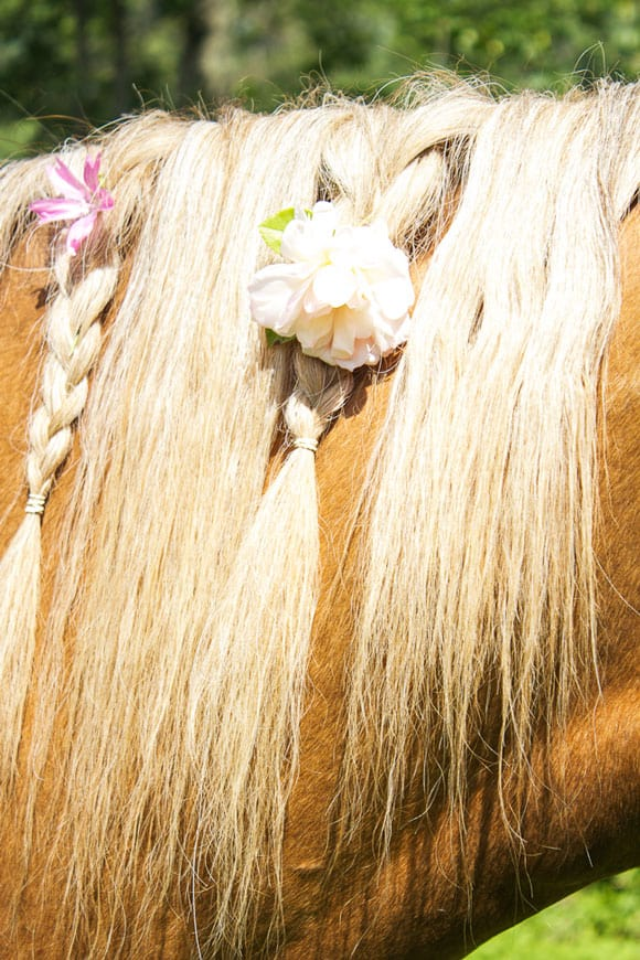 Braided mane with roses