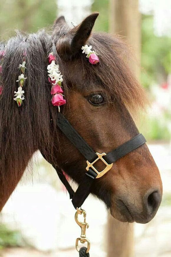 Horse with flowers in the mane
