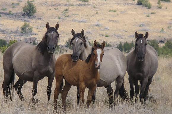 Legend Horses