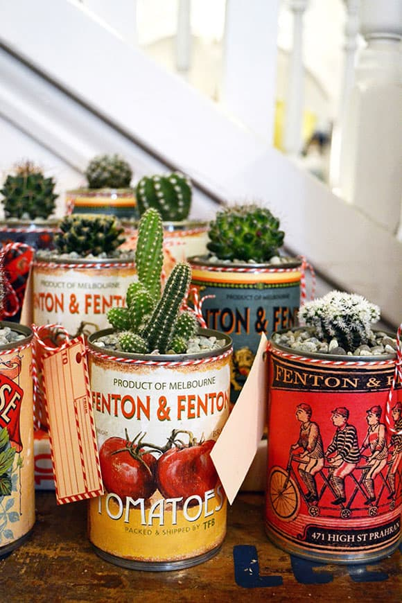 Cacti in Tin Cans