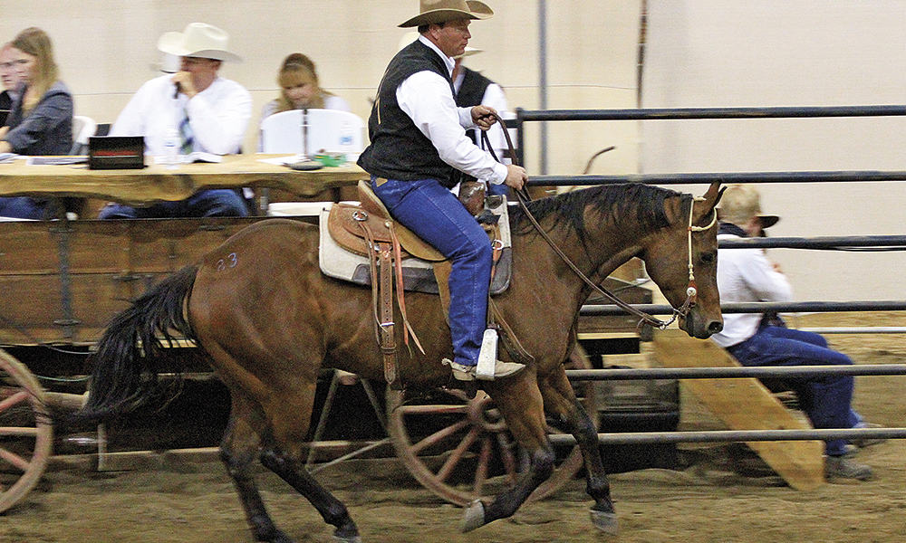 McNabb-on-high-selling-gelding-2015