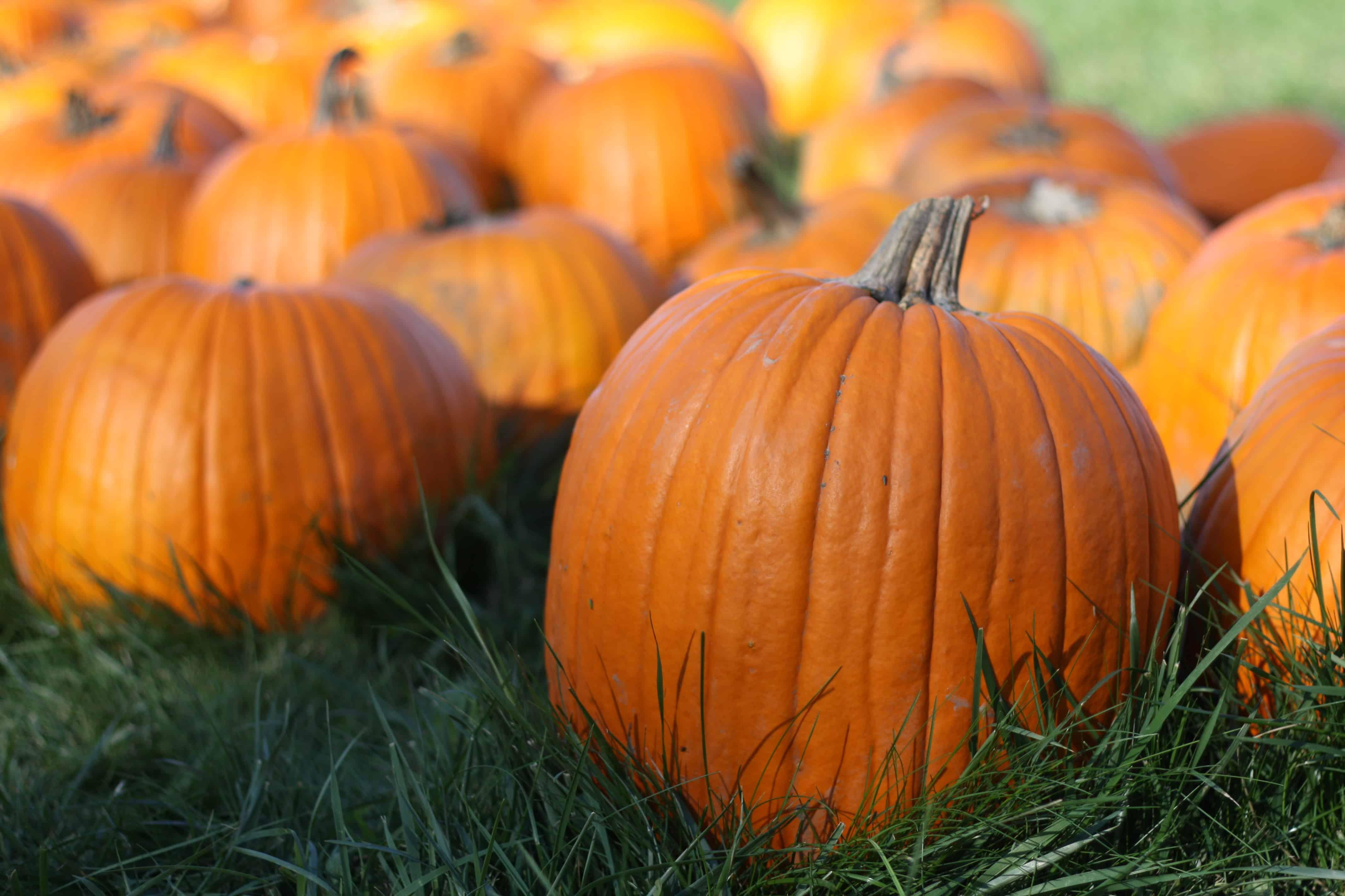 pumpkin-pic