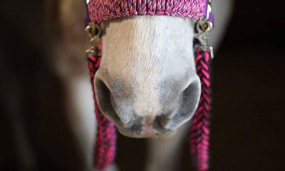 Cowgirl - Reins for Rescues