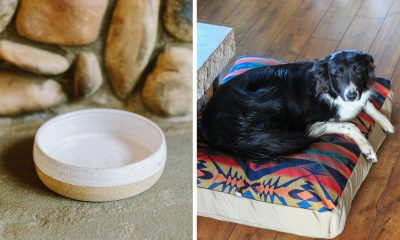 Dog accessories for the pampered pooch