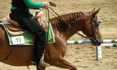 Cowgirl - Jog