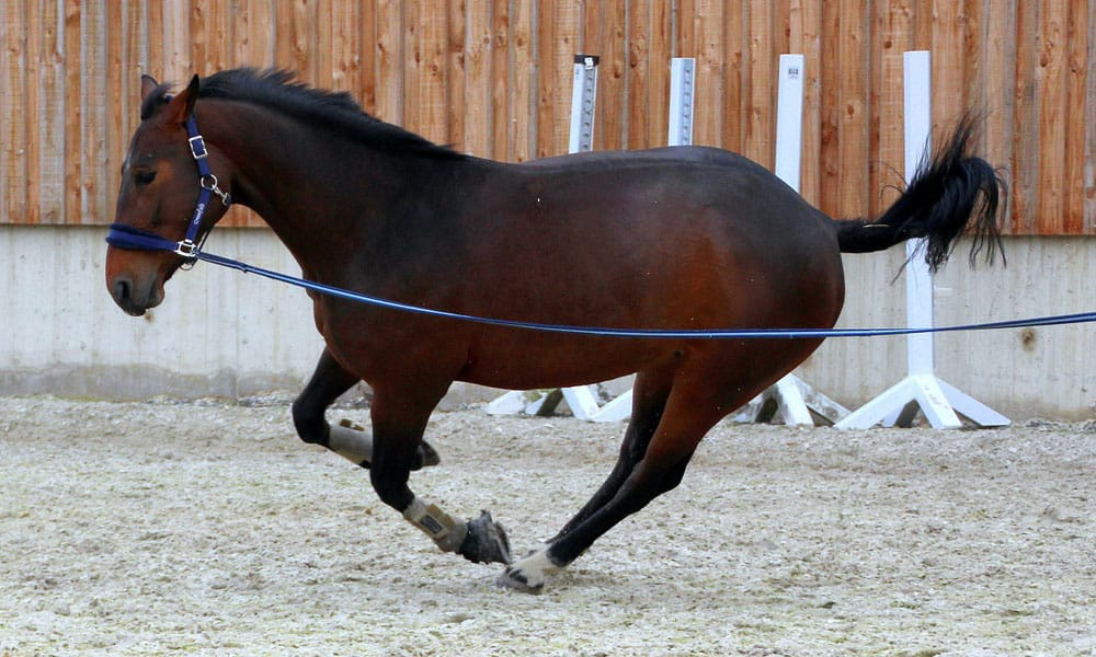 Cowgirl - Lunging