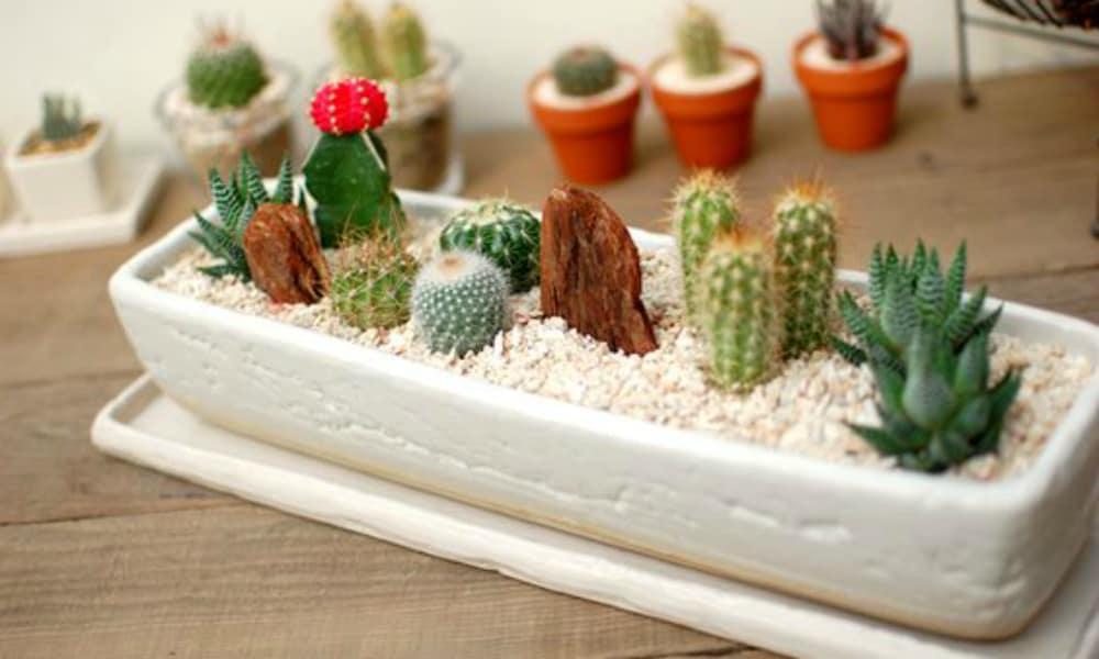 cactus cacti cowgirl magazine
