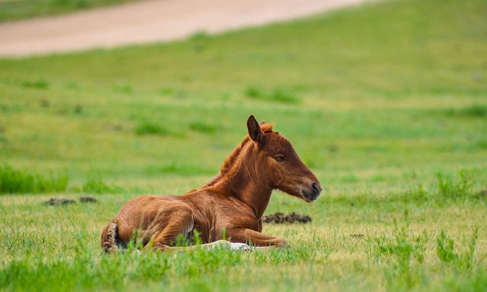 6 facts about foals that you should know cowgirl magazine