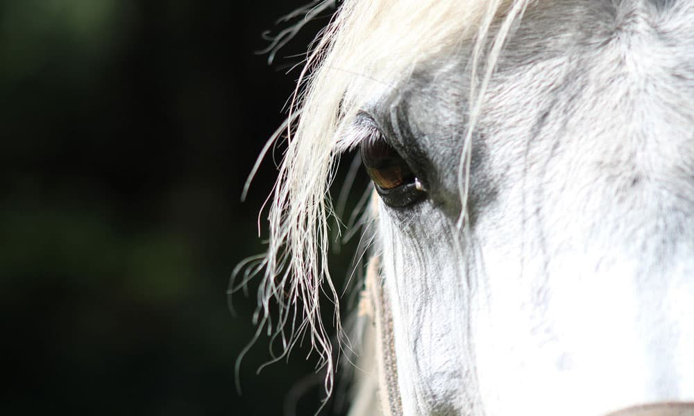 Handle Your Horse's Eye Infection Or Injury The Right Way