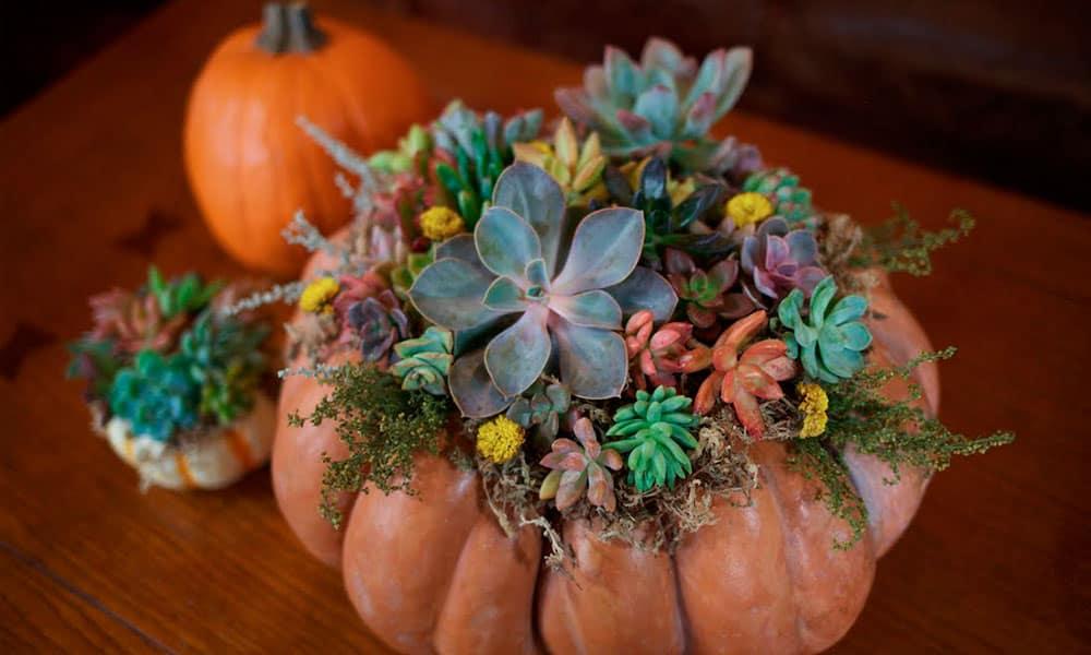 Succulent pumpkin arrangements