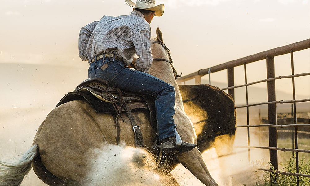 Down The Fence Cow Horse Netflix Movie Night Cowgirl Magazine