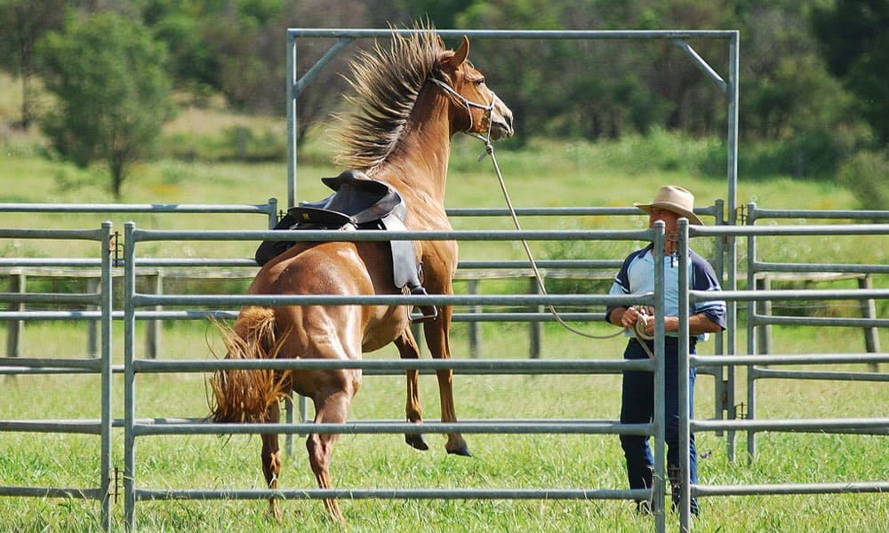 """""""Cowgirl Magazine"""" - Horse Rearing"""