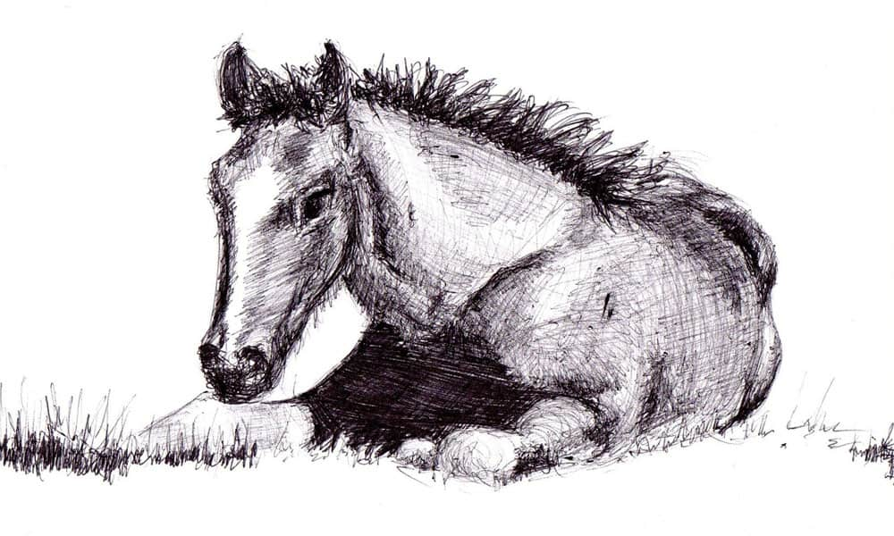 How To Draw A Horse Step By Step | Cowgirl Magazine
