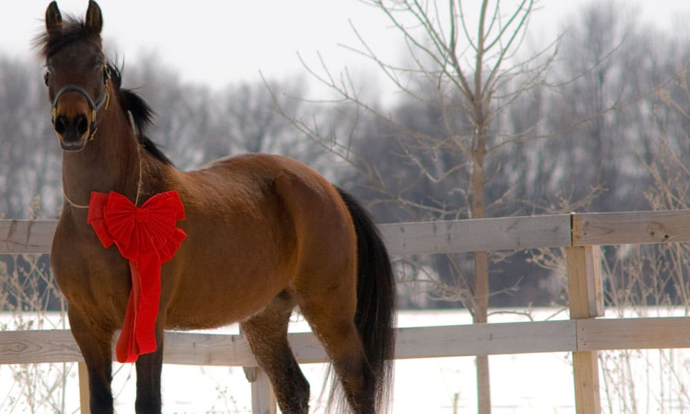 Christmas Horse Pictures.Dress Your Horse Up For Christmas Cowgirl Magazine