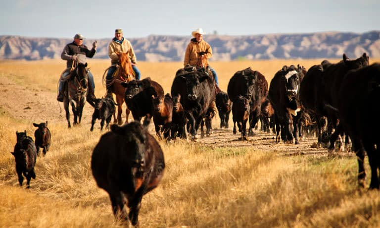 Blacktail Ranch, Wolf Creek, Montana
