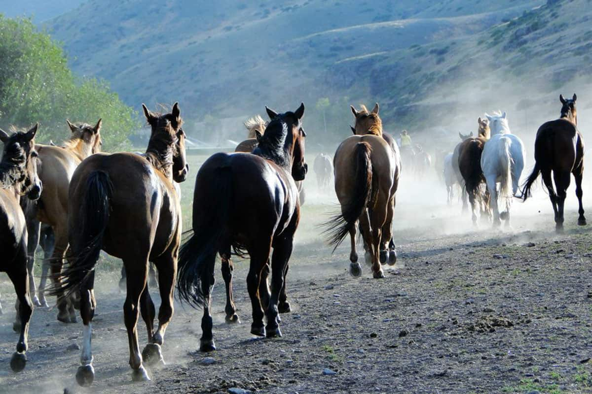 rocking z ranch dude ranch association dra cowgirl magazine