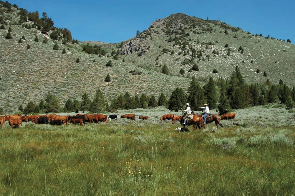 dude ranch