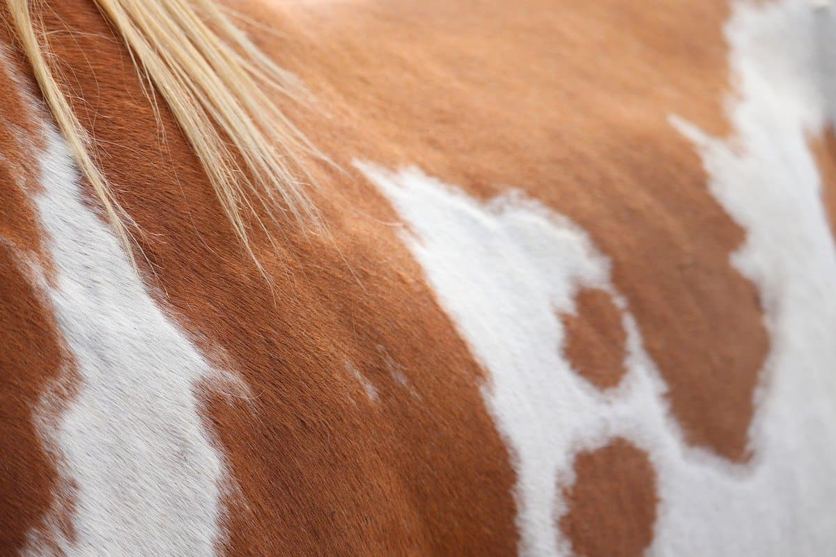 paint horse cowgirl magazine