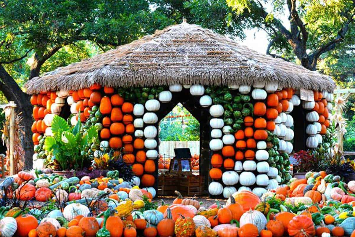 pumpkin pumpkins cowgirl magazine fall autumn